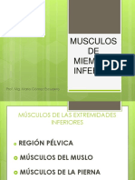 Diapositiva n°7 miembro inferior por funcion muscular