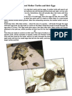 Facts about Mother Turtles and their Eggs