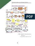procéssus de fabrication de sucre.docx