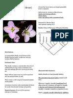 Brassicaceae Notes