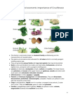 Characteristics and Economic Importance of Brassicaceae