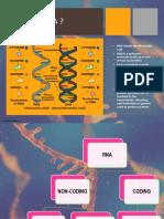 RNA PPT.pptx