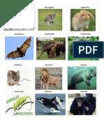 imagenesde animales mamiferos retranca