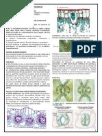 Aula 7 - Organização dos tecidos vegetais em sistemas - sistema de revestimento