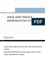 4_Male_and_Female_Reproductive_Organs_ppt.pptx