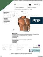 Muscoli del Torace - Atlante Anatomico