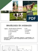 BRUCELOSIS EN ANIMALES.pptx