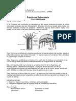 Practica_de_laboratorio_1_Phylum_Cnidaria_1