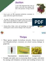 hppt tugas opt anggur (2)