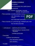 Pneumologie-revarsat