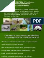 Clase 7 Homoptera Correg