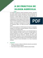 GUÍA DE PRÁCTICA DE MICOLOGÍA AGRÍCOLA