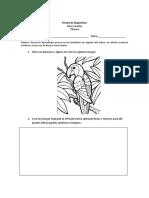 EVALUACION  DE DIAGNOSTICO ARTES VISUALES