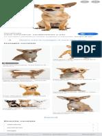 cane chihuahua - Cerca con Google