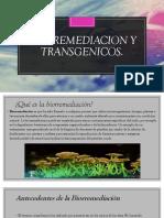 BIORREMEDIACION Y TRANSGENICOS