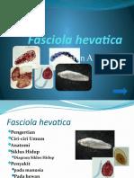 Fasciola hevatica