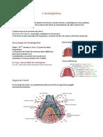 8 - L'amélogenèse