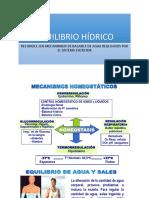 EQUILIBRIO HÍDRICO