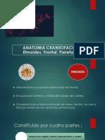 ANATOMIA, Etmoides, Frontal, Parietales