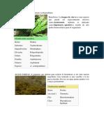 Clasificación científica de las plantas.docx