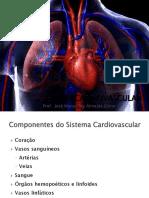 Cardiovascularmorfo.pdf