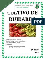 CULTIVO DE RUIBARBO