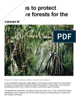 5 reasons to protect mangrove forests for the future.docx