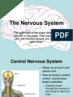 nervous system