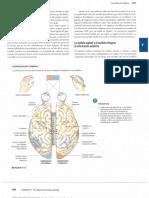4- Silverthon, D. (2014). Fisiología humana un enfoque integrado. Editorial médica Panamericana. Mexico. Capítulo 9. Parte C