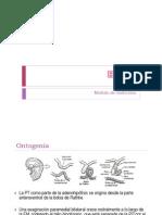 Hipofisis Fisiología