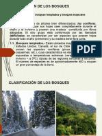 2 Clasificación de los bosques (C-2)