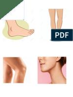 partes del cuerpo en grande