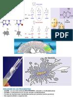ADN metabol -Reg Hor Humano 9 (1).ppt