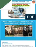 INVESTIGACION SOBRE GANADO VACUNO, GANADO PORCINO ACABADO DE GUZMAN.pptx