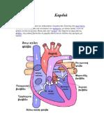 Καρδιά και λειτουργία της