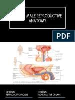 Human Reproductive Anatomy