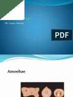 parasitology lecture amoeba