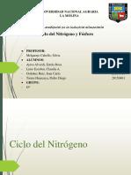 CICLO DE FOSFORO Y NITROGENO