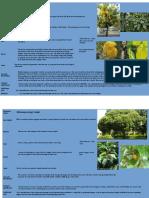 Herbarium (1).pptx