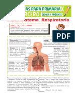 Partes-del-Sistema-Respiratorio-para-Tercero-de-Primaria