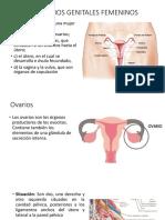 ÓRGANOS GENITALES FEMENINOS (2).pptx