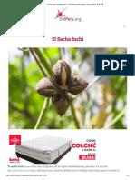 Sacha Inchi, Propiedades y Beneficios del Aceite y las Semillas【2019】