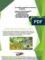 1 Reproducción sexual y asexual en moneras y protistas