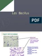 les_bacillus