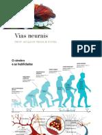 Vias neurais - neurotransmissores.pdf