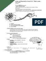 exam nervous system
