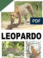 leopardo.docx