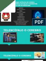 TELENCEFALO O CEREBRO FINAL FINAL