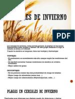 Cereales de invierno.pptx