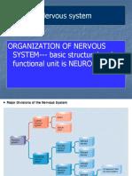 The Nervous System - nursing.ppt